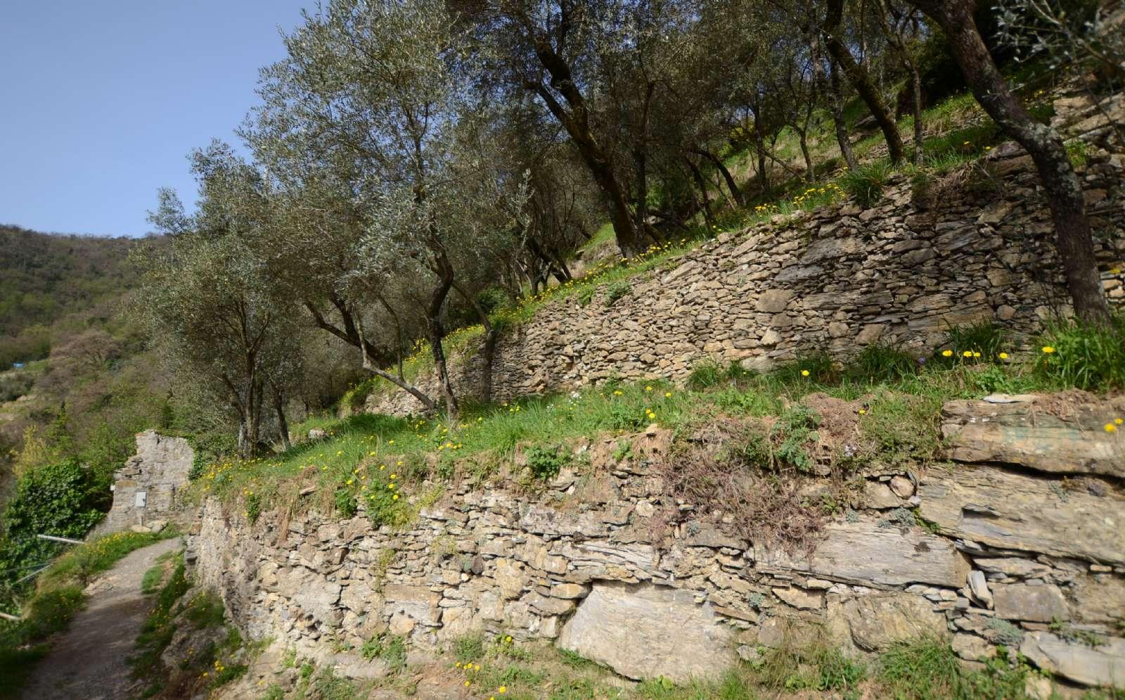 Klassisk ligurisk landskab med jordterrasser