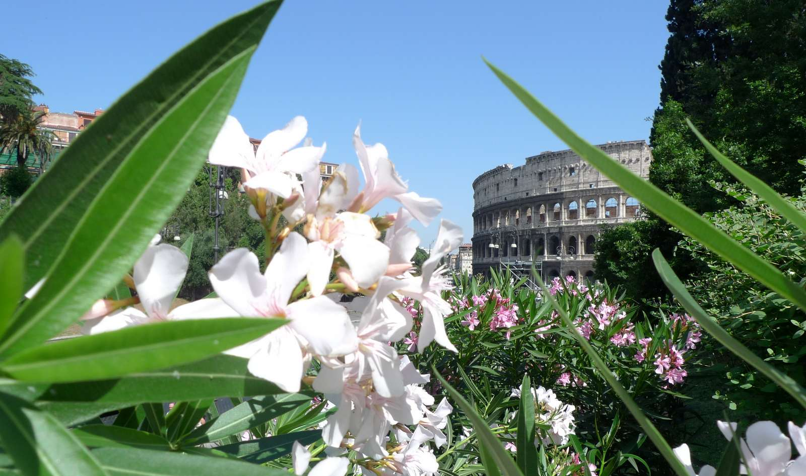 En glimt av Colosseum
