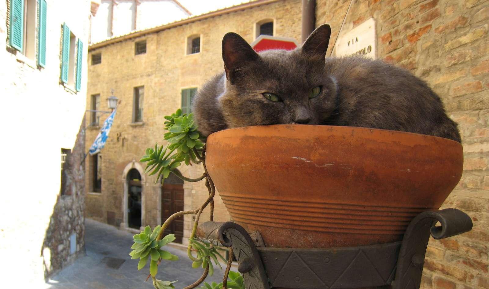 Overvågen kat i Montepulciano