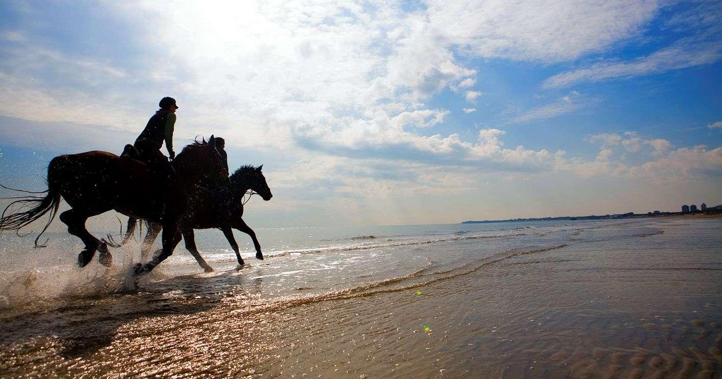 Pferde in Lignano