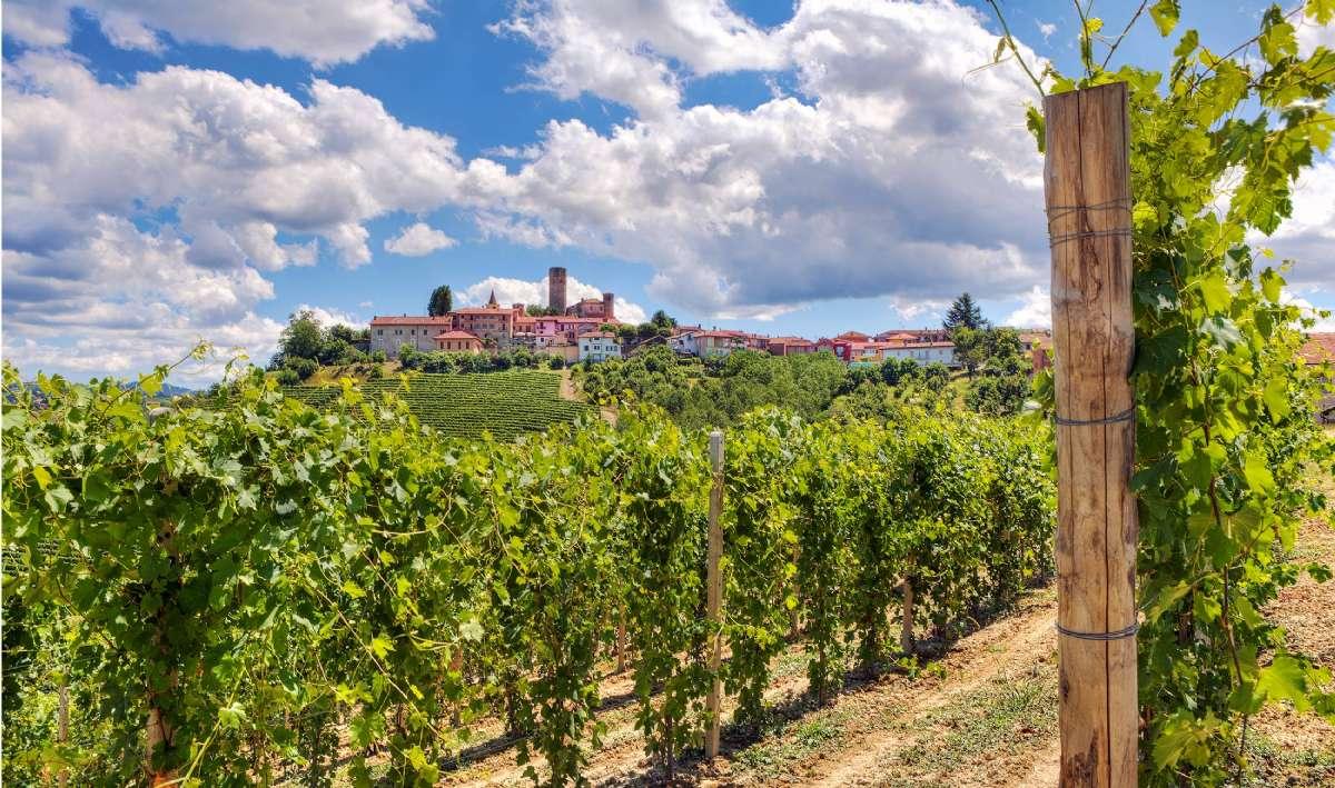 Piemonte producerer nogle af Italiens bedste vine