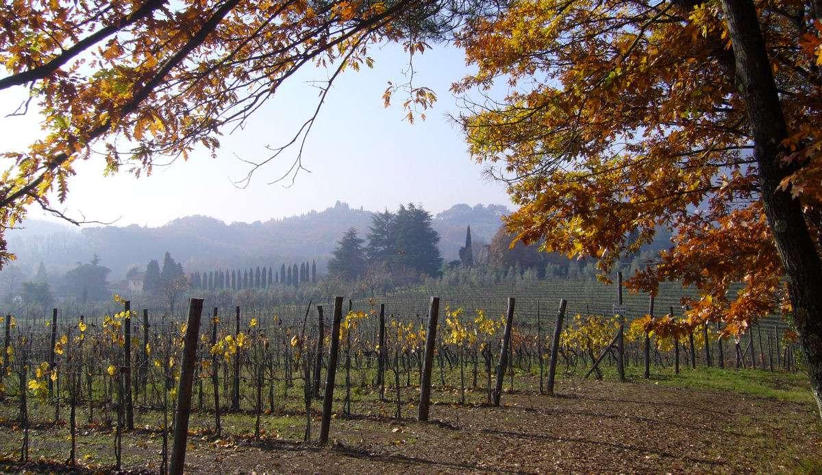 Les domaines viticoles en Toscane