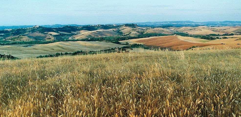Les collines de Pise