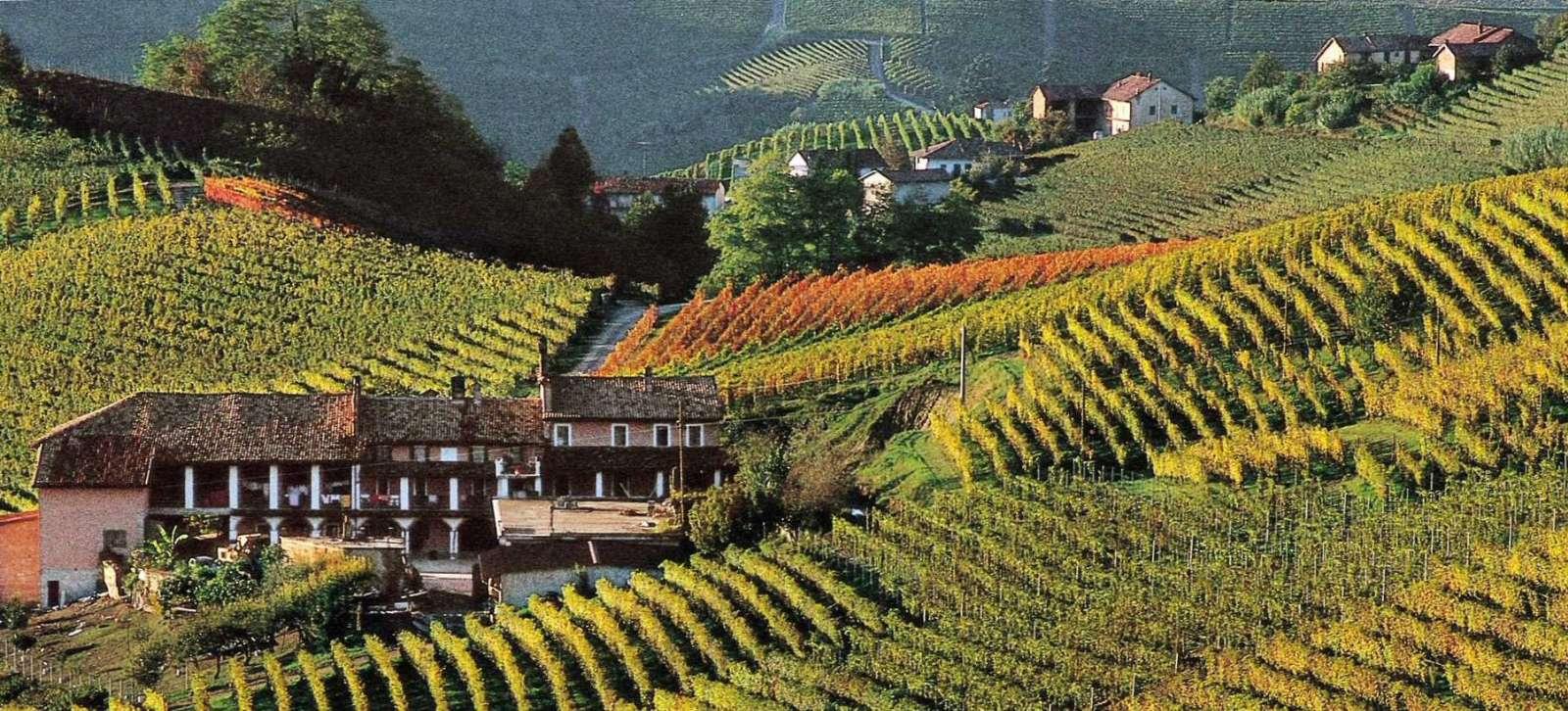 Piemontes böljande vinmarker