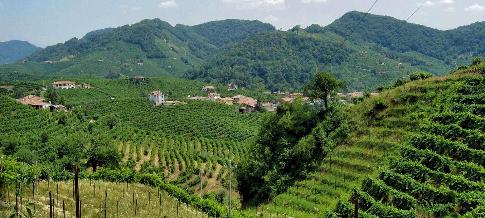 Valpolicella ligger mellan Verona och Gardasjön