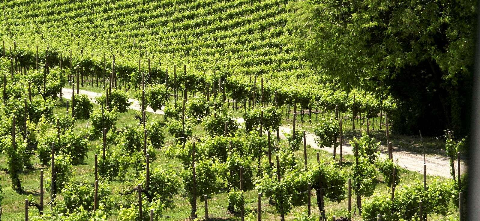 Vinmarker i Valpolicella