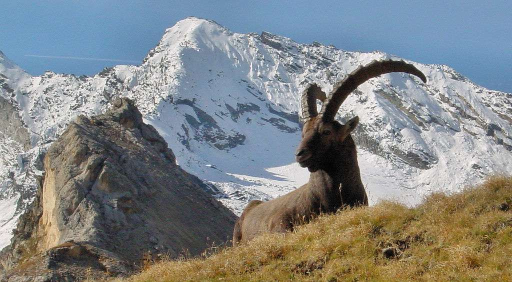 Store naturoplevelser venter i Aostadalen