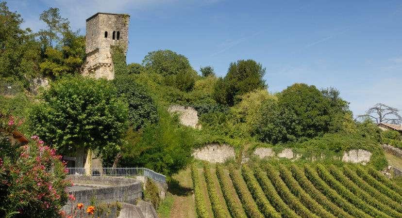 Vinmarker ved St. Emilion