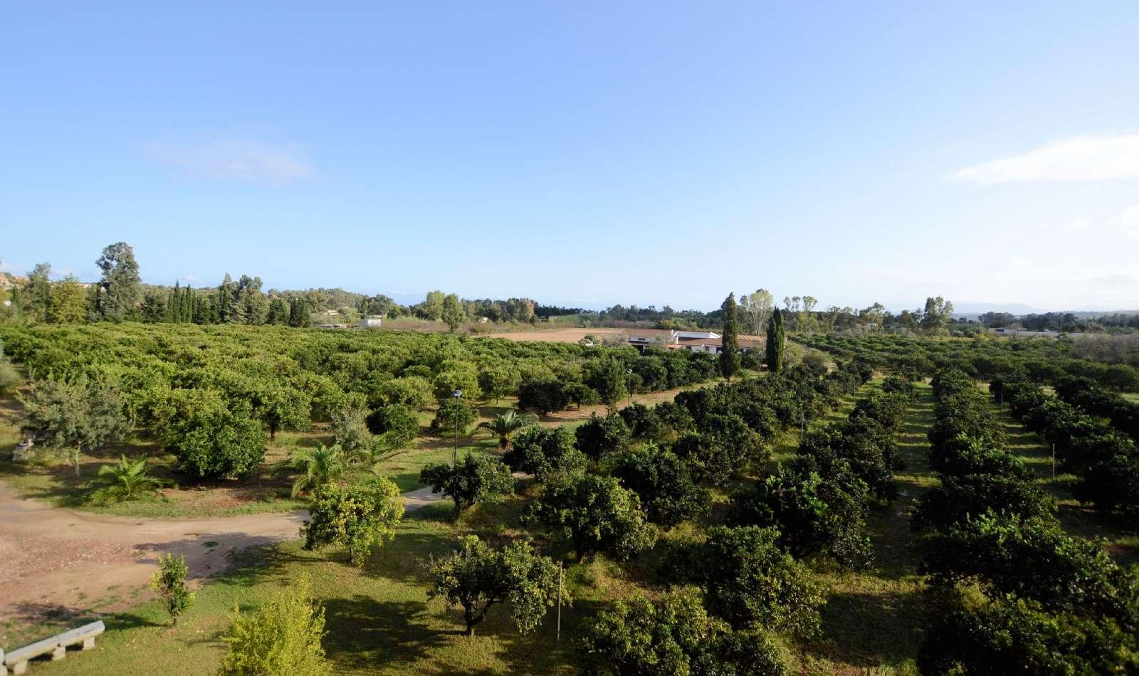 Die Sicht entlang des Obstgartens