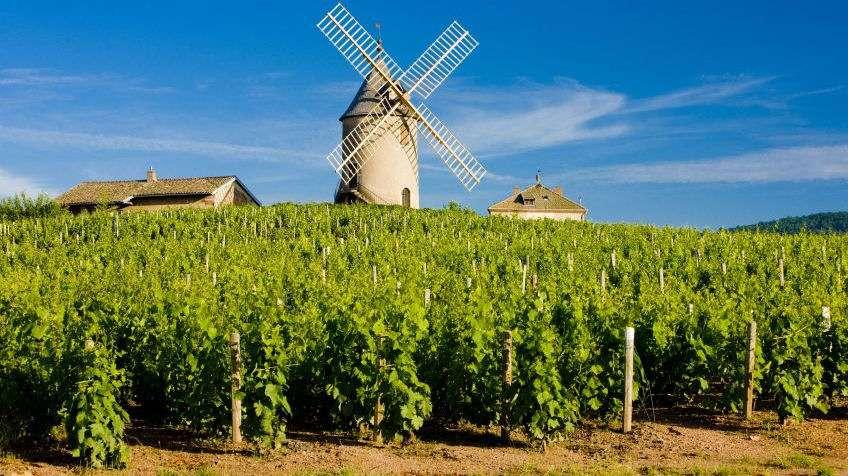 Vindmølle i vinmarkerne ved Chénas