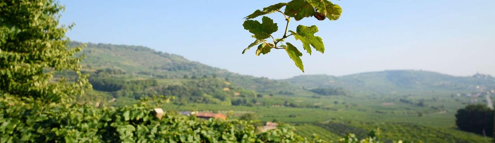 Les douces collines de la Valpolicella