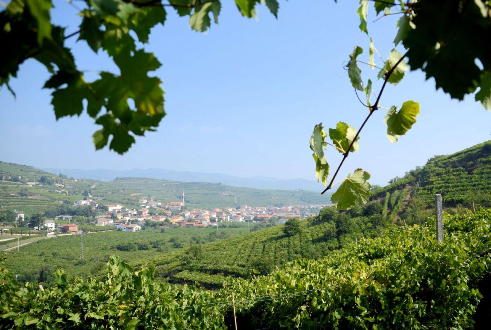 Fin omväxling mellan vinmarker och landsbyar