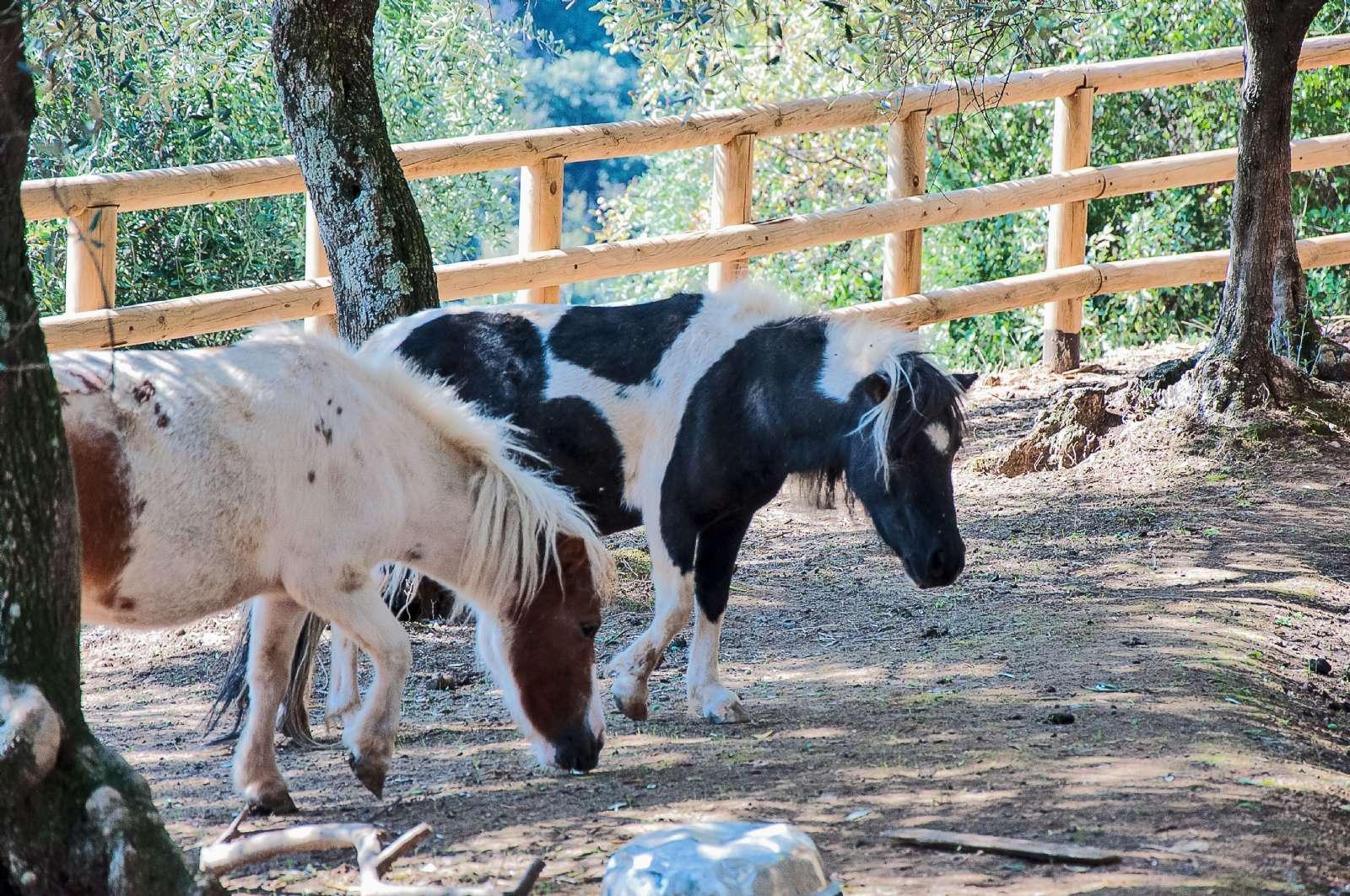 Ponyerne