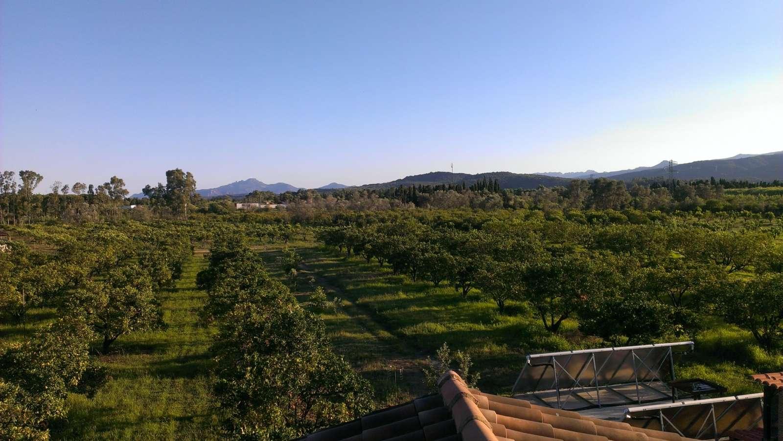 La vue sur l'orangeraie