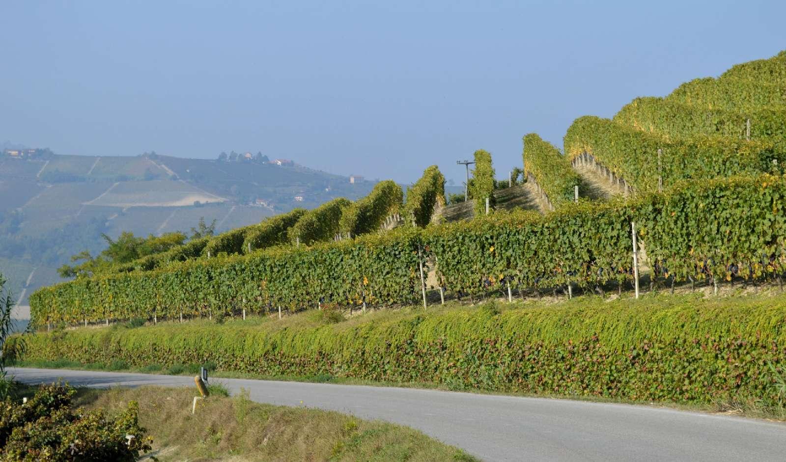 Panoramisk utsikt över vinlandskapet