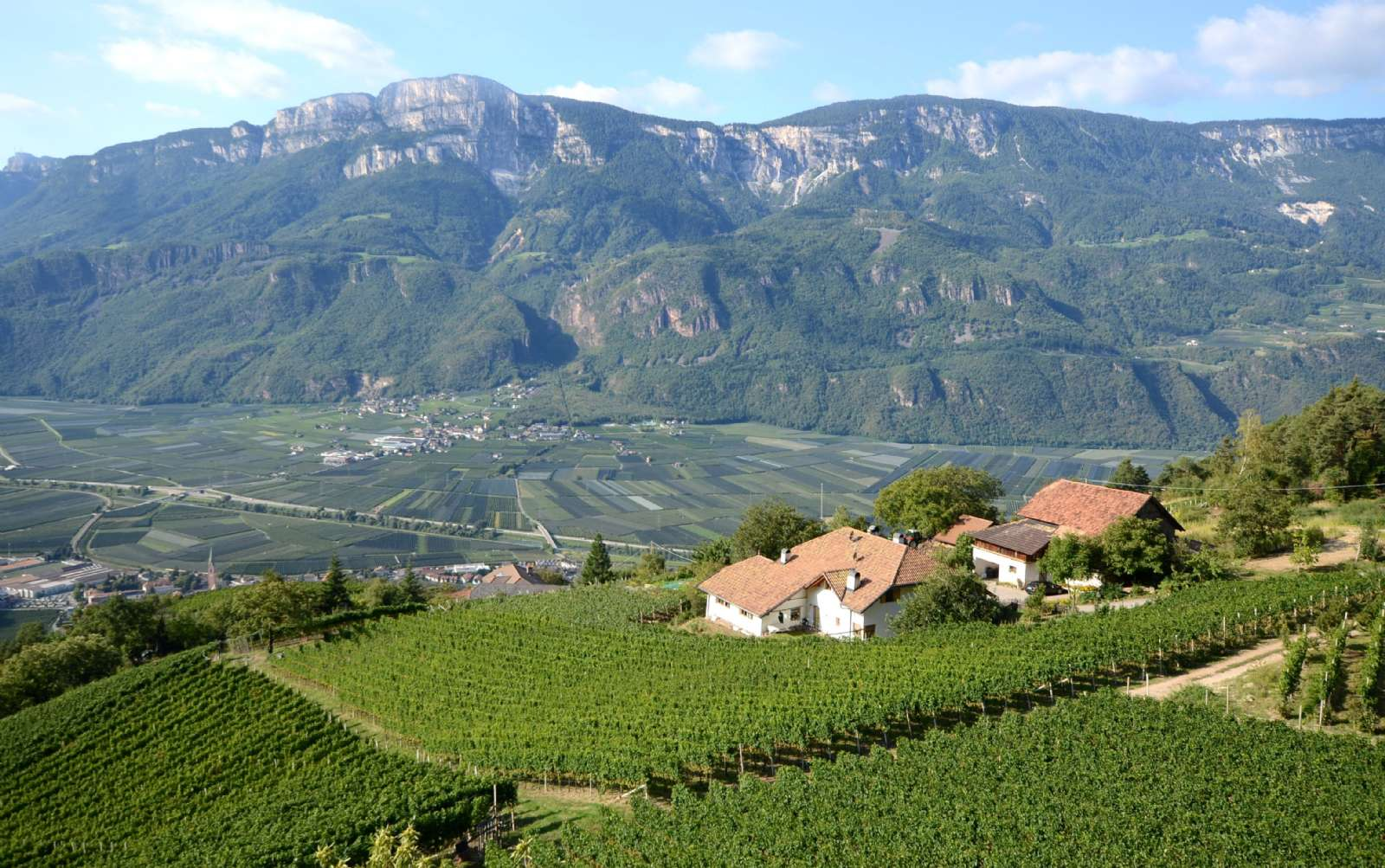 Le vignoble entre Bolzano et Trente, à Caldaro
