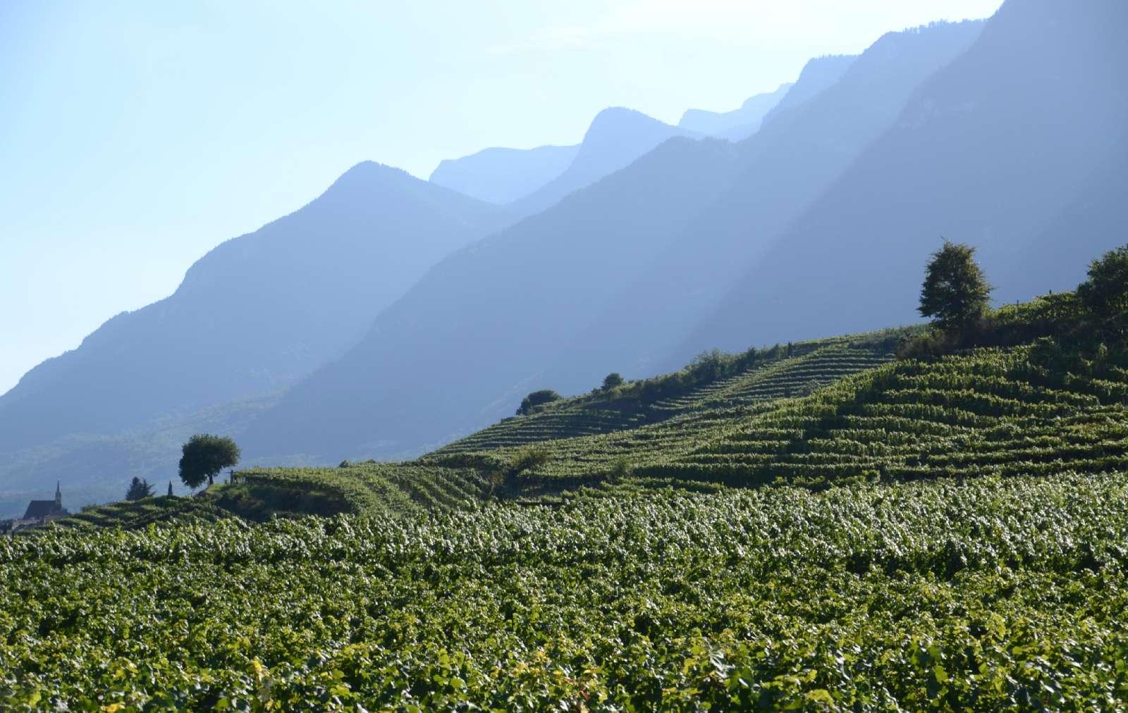 Région viticole entre Bolzano et Trento, à Caldaro