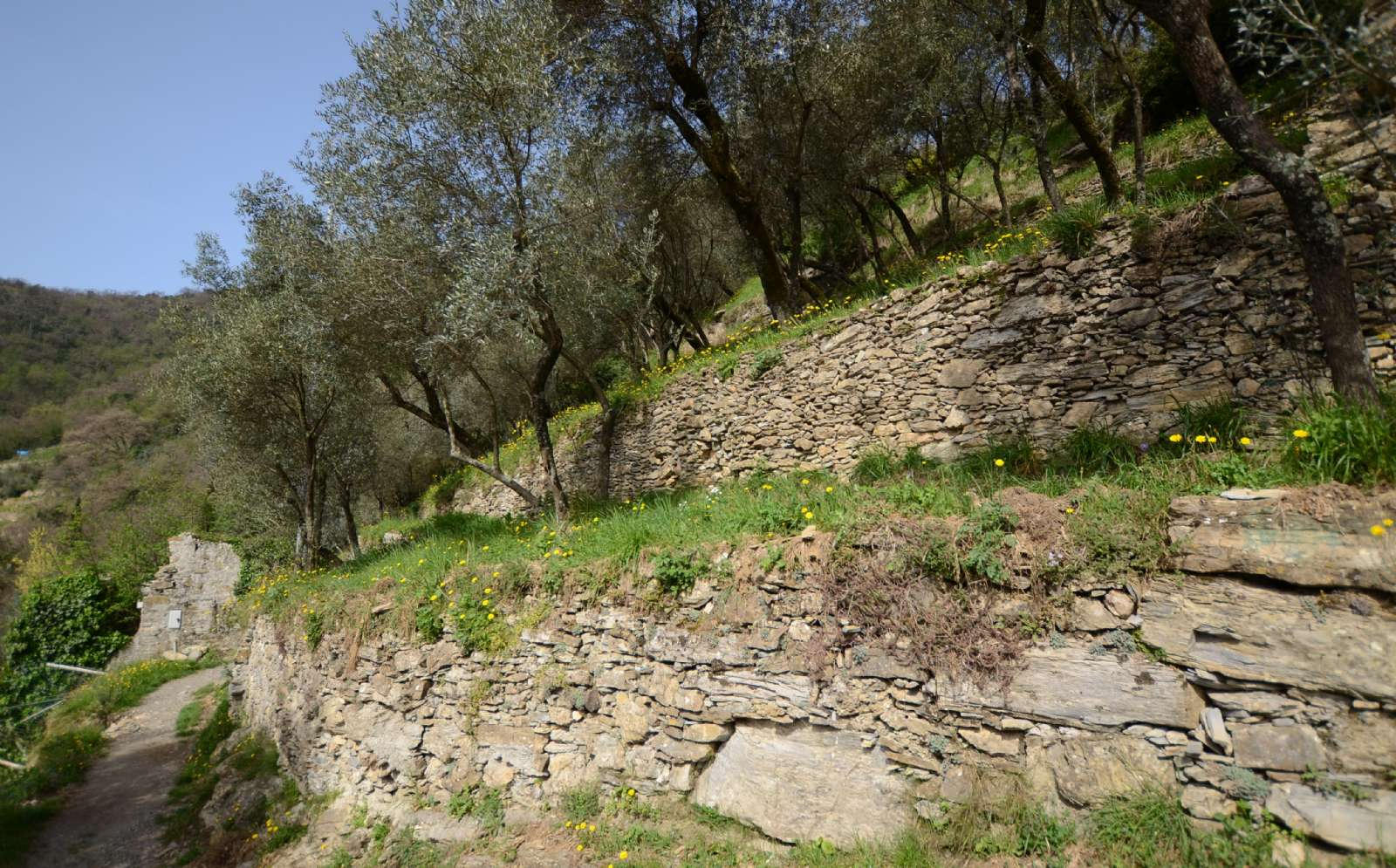 Classic Ligurian landscape with soil terraces