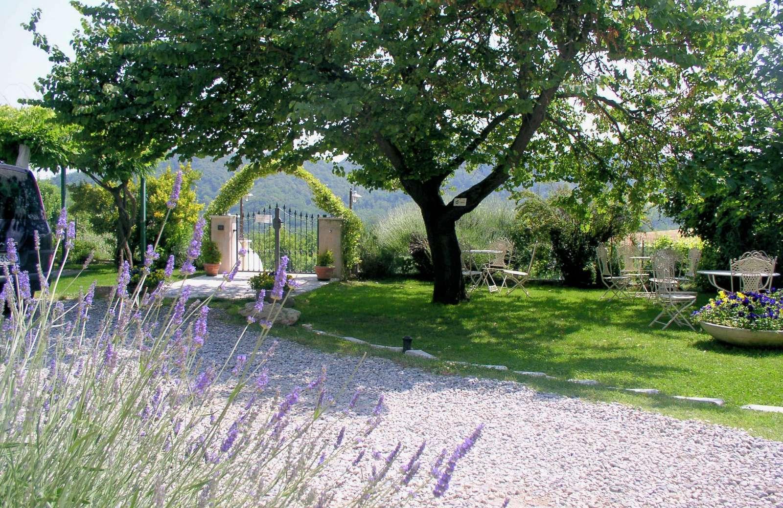 Have med lavendel