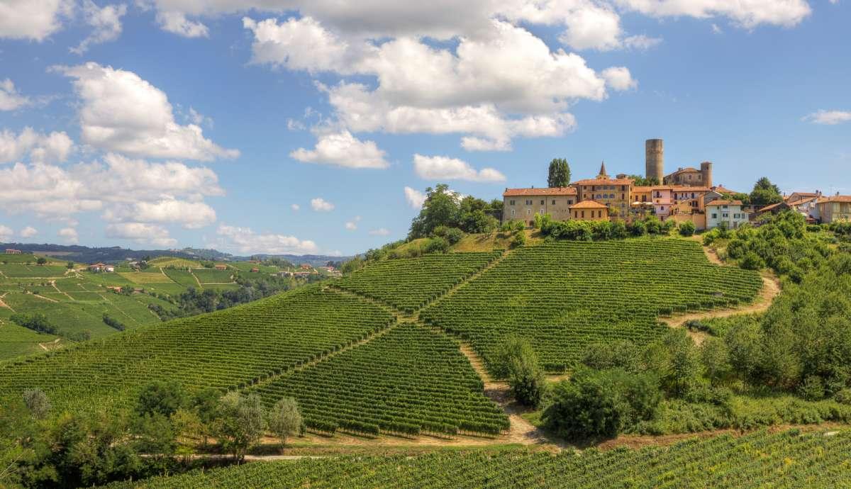 Ett vinlandskap i Piemonte