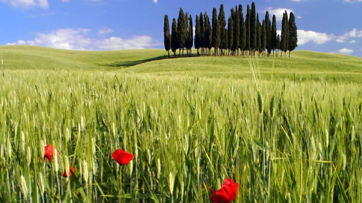 Biluthyrning i Toscana