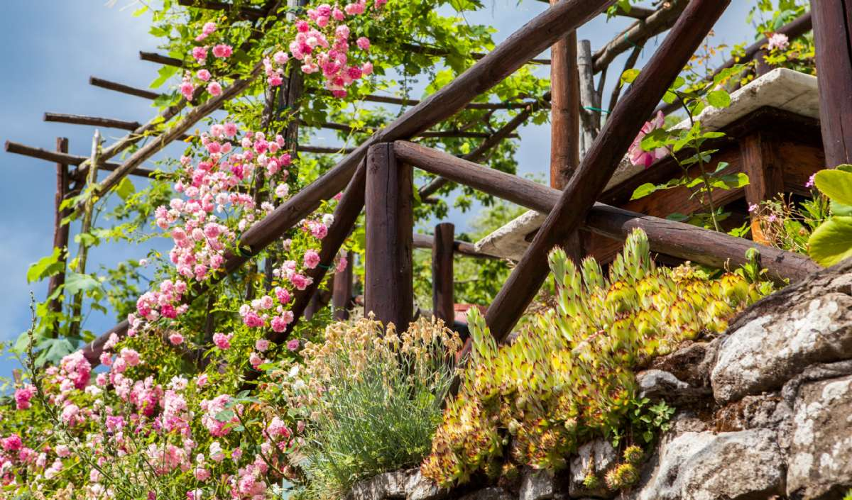Blomster og roder op ad en <em>pergola</em>