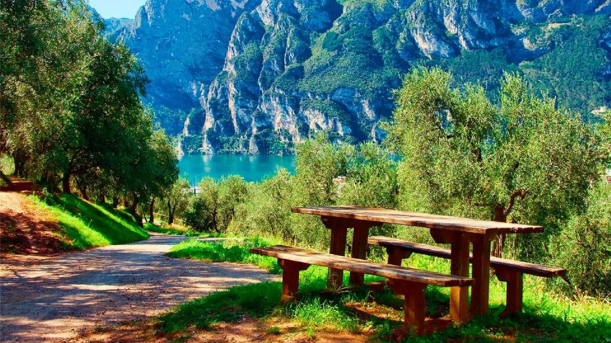 Piknik i det grønne
