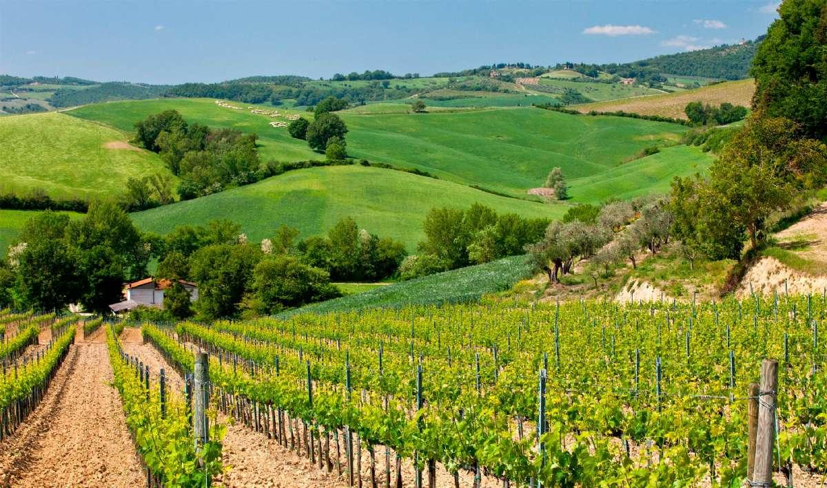 Umbria er kjent for de bølgende, grønne markene som minner om Toscana