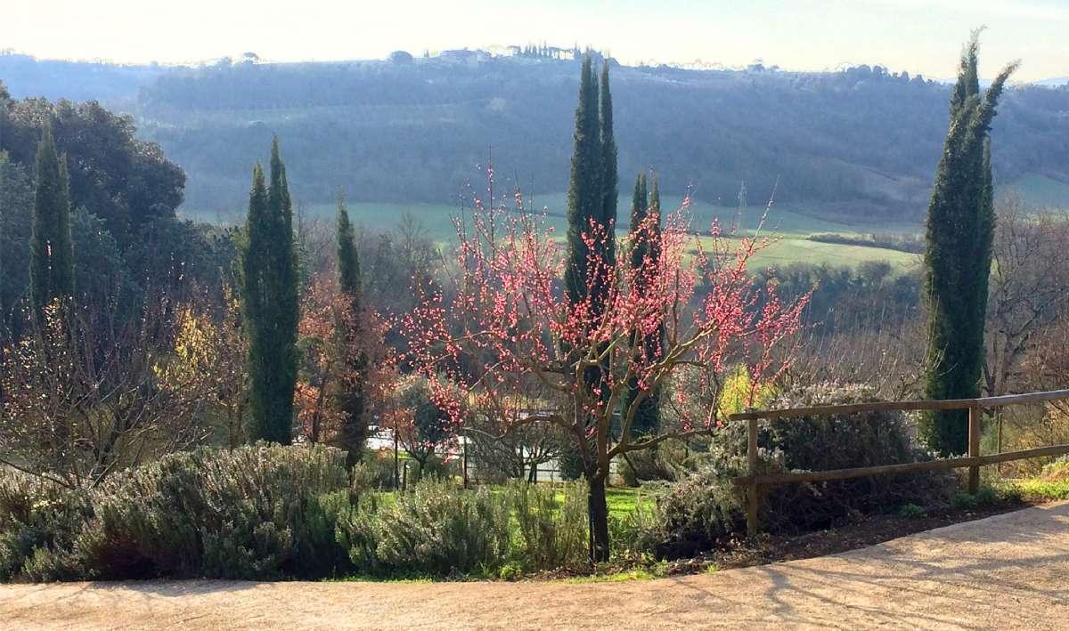 Vår på La Torraccia di Chiusi