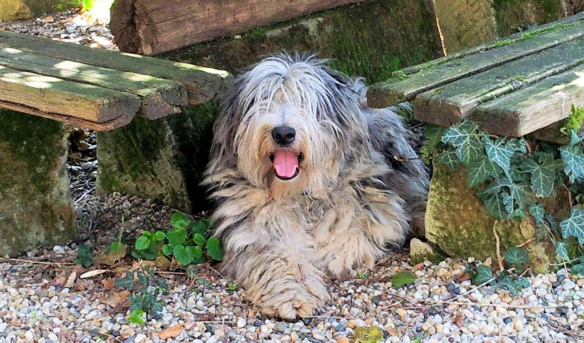 Hunden Bigia - gör dig redo för 35 kg vänlighet och kärlek