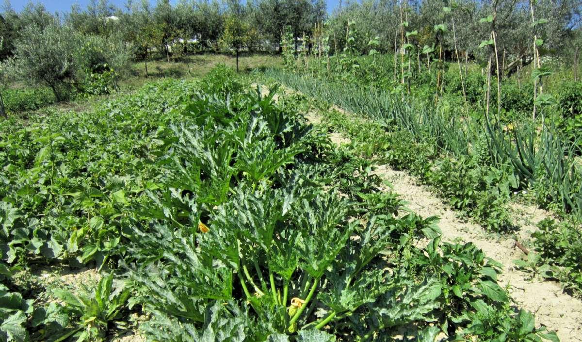 Grøntsagershave på Masseria Santa Lucia