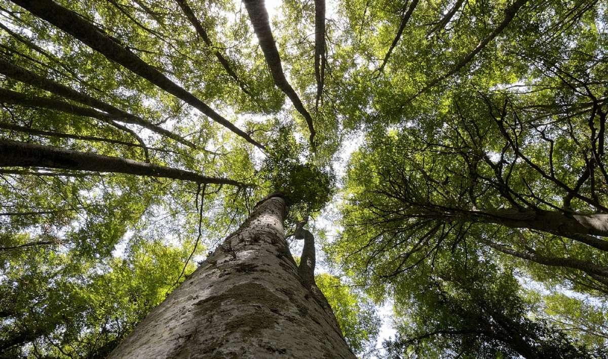 Den forhistoriske skov Forresta