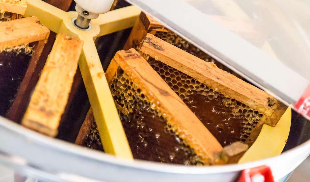 Utöver gott vin produceras här också honung