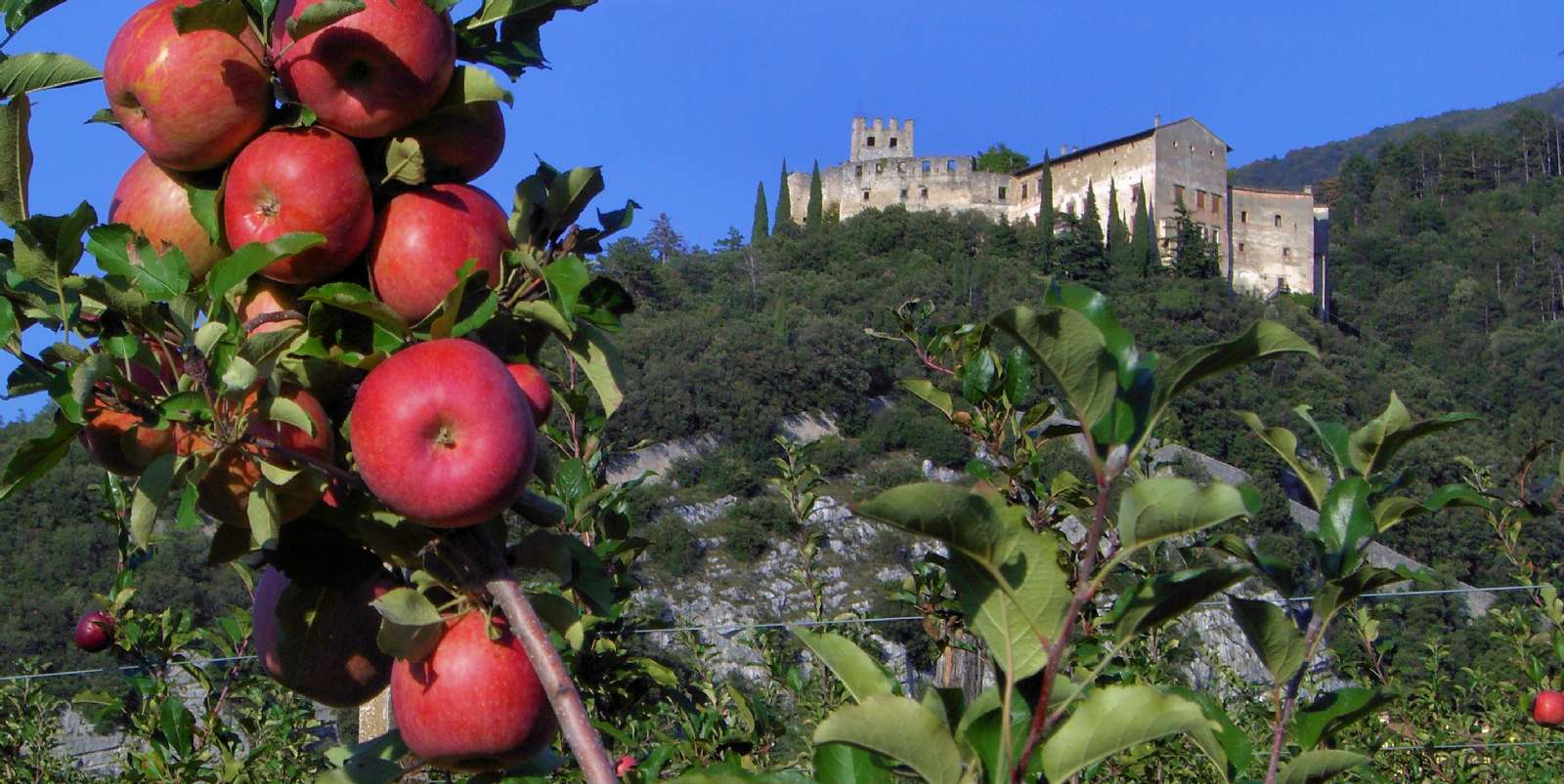 The region produces large quantities of apples