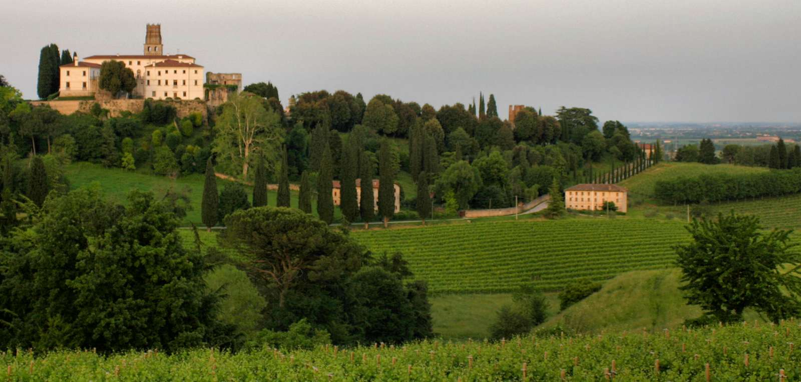 The Veneto also offers breathtaking vineyards