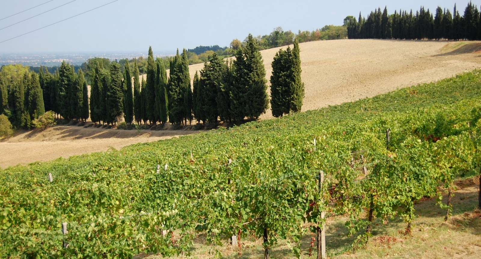 Vineyards and cypress-lined avenues a la Toscana