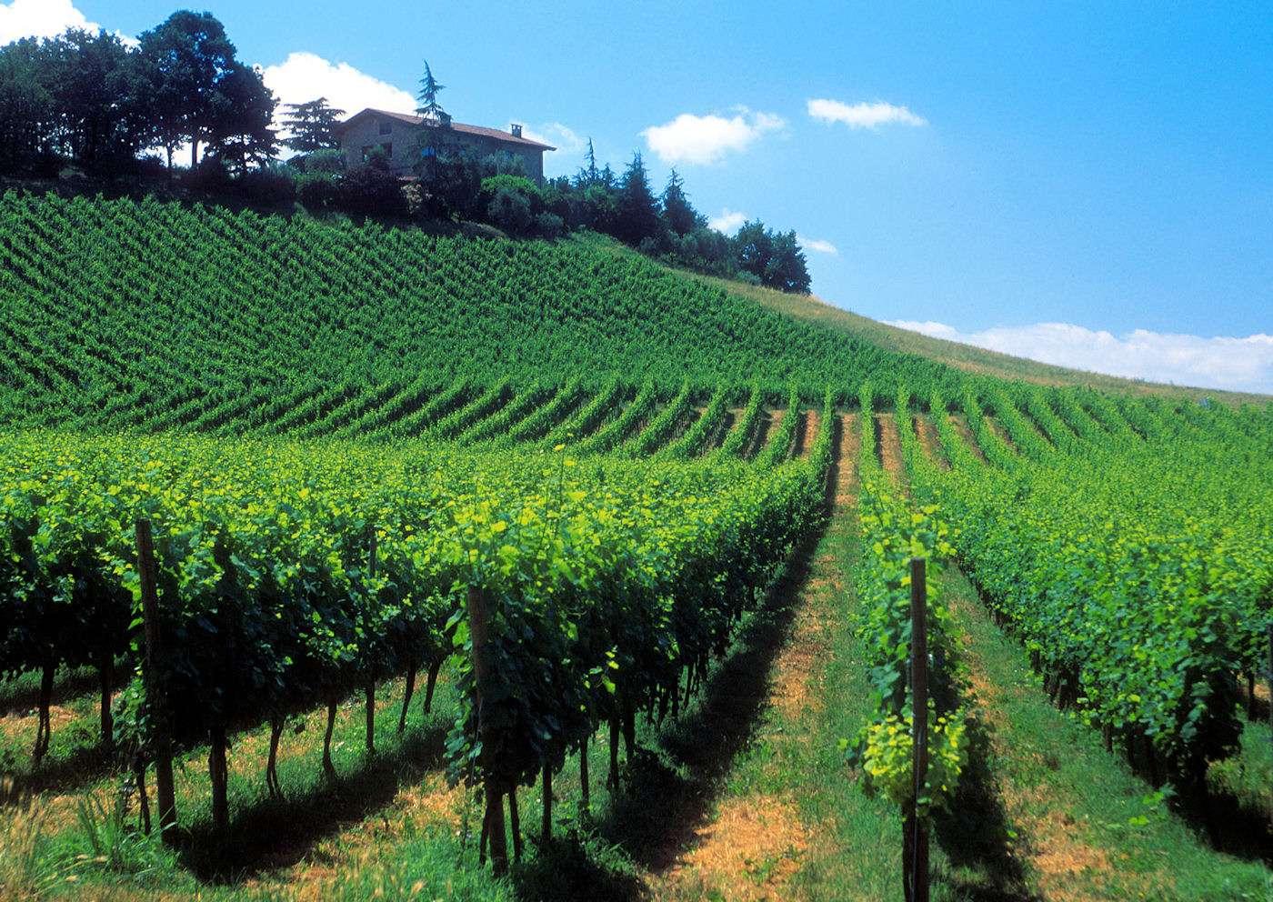 Le vignoble de Franciacorta