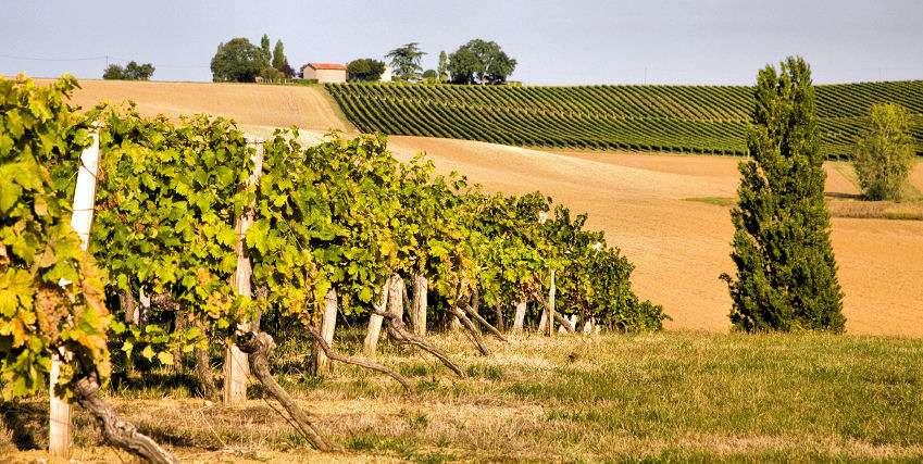 Vinmarker vid Gascogne
