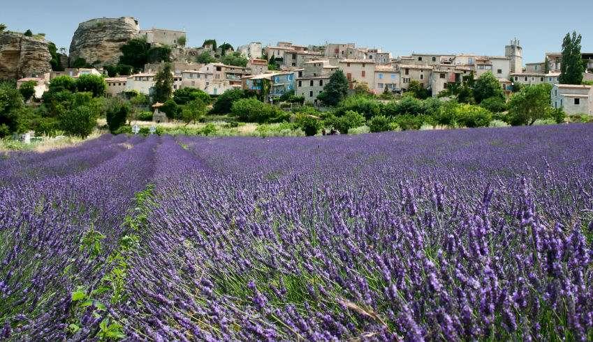 Lavendel marker i Provence