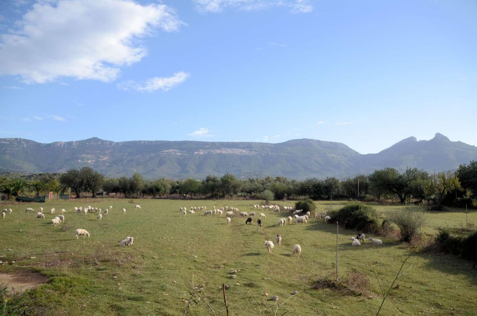 Les troupeaux en pâture