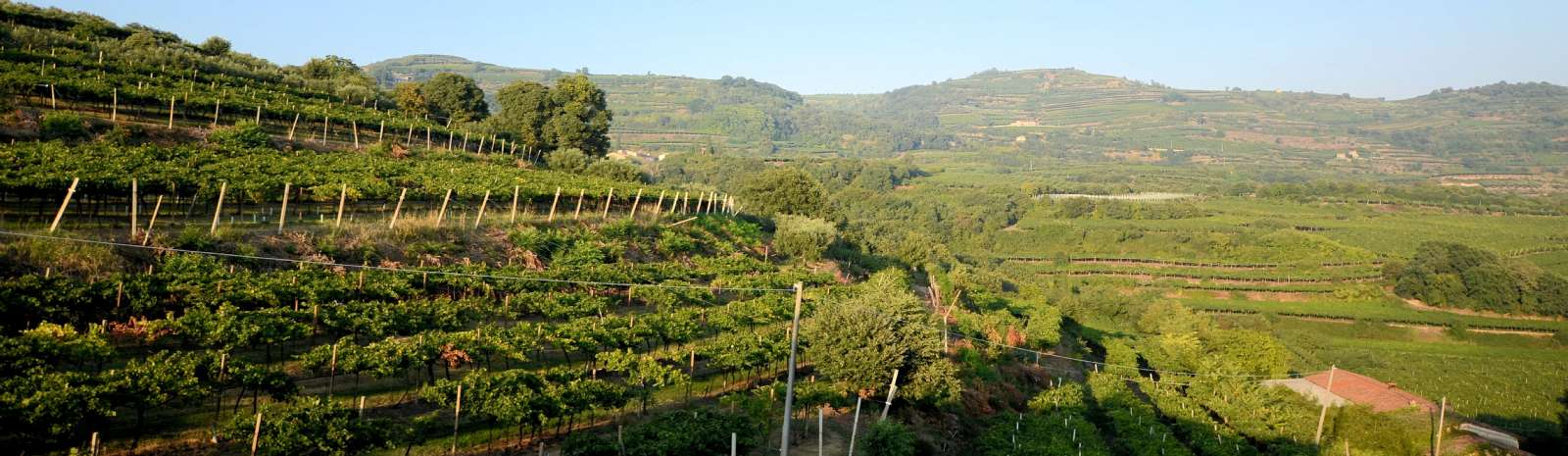 Gyldent aftenlys i Valpolicellas nabodistrikt Soave