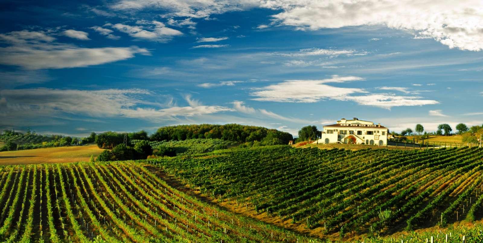 Vinmarker i Chianti