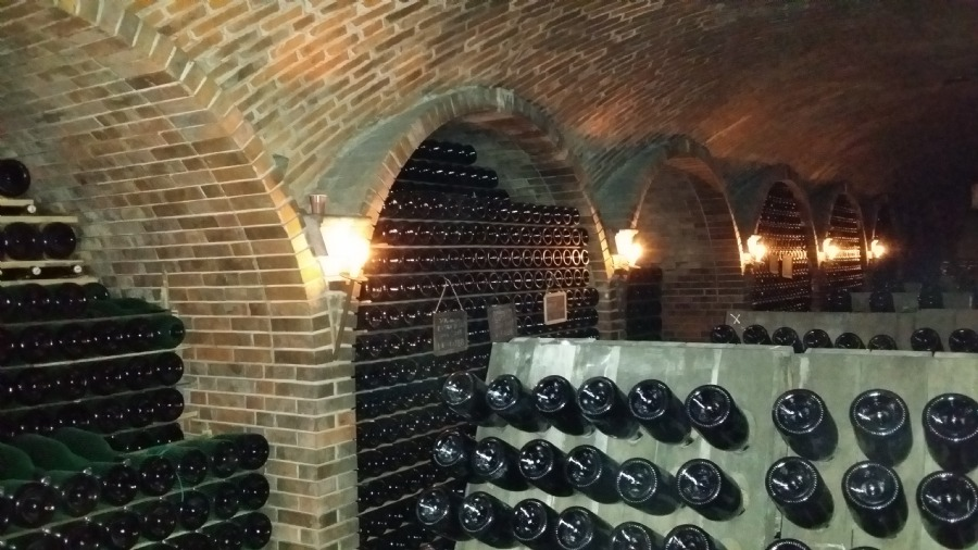 Look around in their nice wine basement. And try the wines!