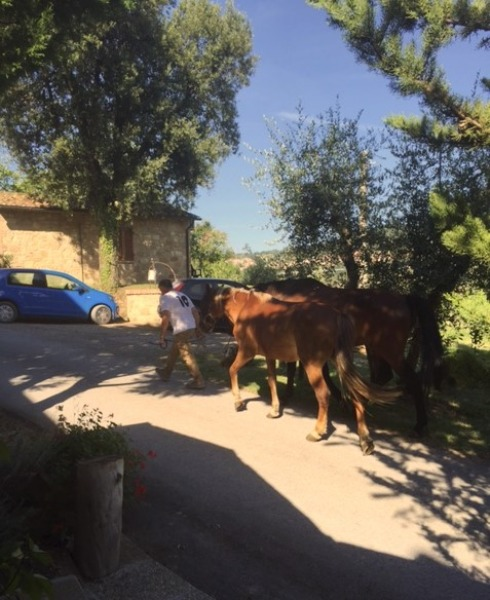 Martas father with the horses